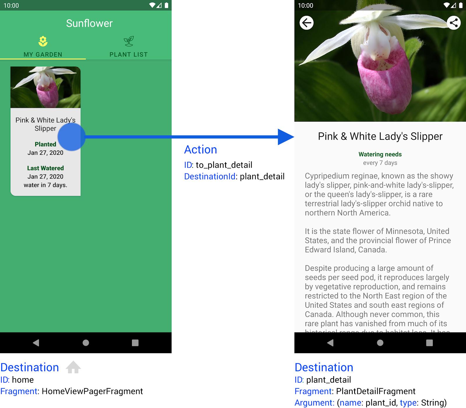Sunflower アプリの 2 つのデスティネーションと、それらを接続するアクション。